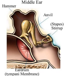 healthy-ear-bones